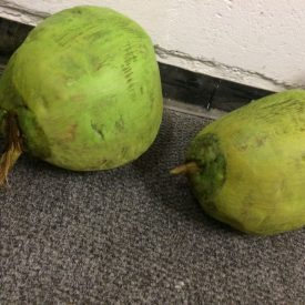 Fabricated Fake Coconuts