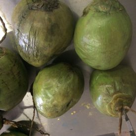 Fabricated Face Coconuts